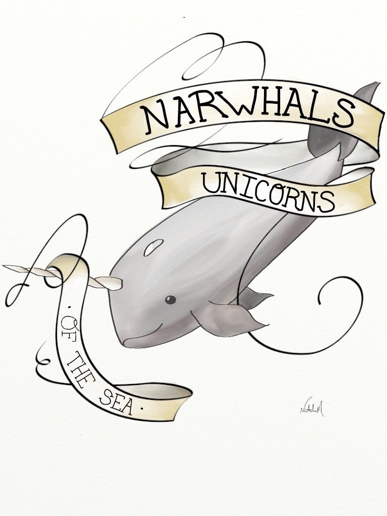 Daily Drawing Narwhals Love Pinterest Drawings and