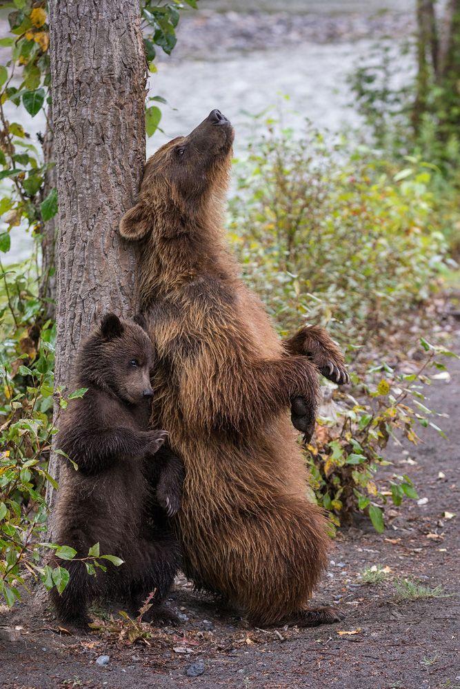 Schubiduuu #bears