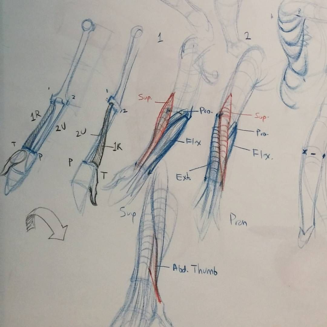 Easiest way to figure out the lower arm: find the bones. Ulna: elbow ...
