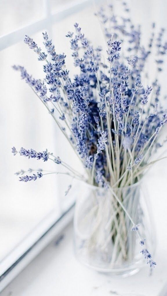 Lovender Lavender Flowers Heart Women/'s Tee Image by Shutterstock