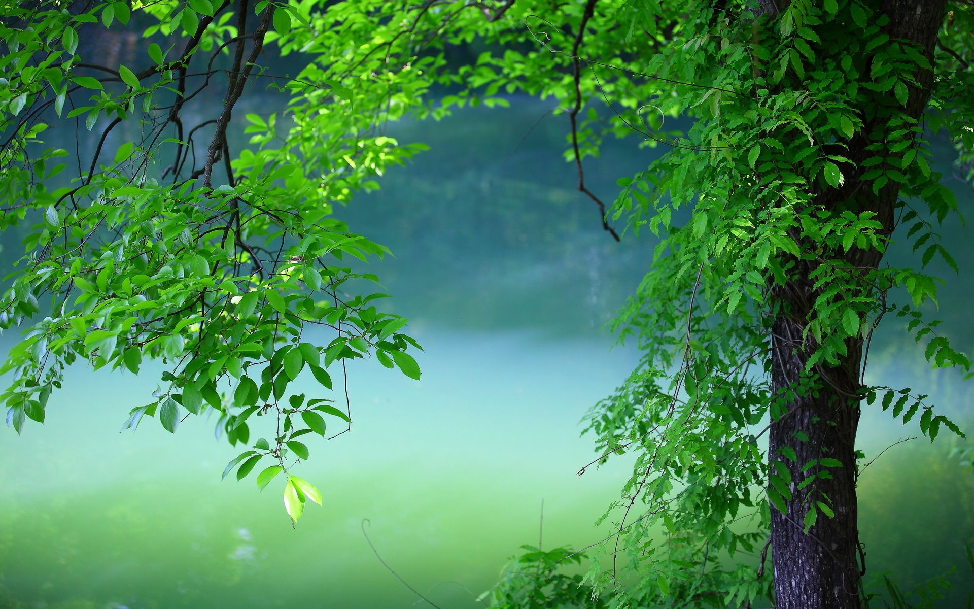 Summer Tree Green Leaves With Images Nature Wallpaper