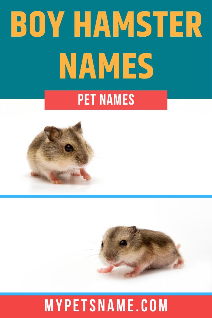 Pin On Boy Pet Names