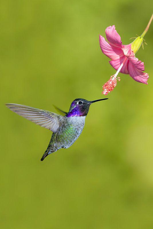 So Beautiful Jewel! ♥♥ Hummingbird Breakfast