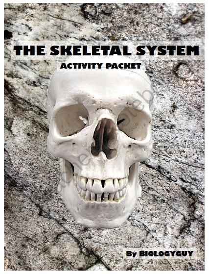 Skeletal System Activity Packet From The Science Corner On