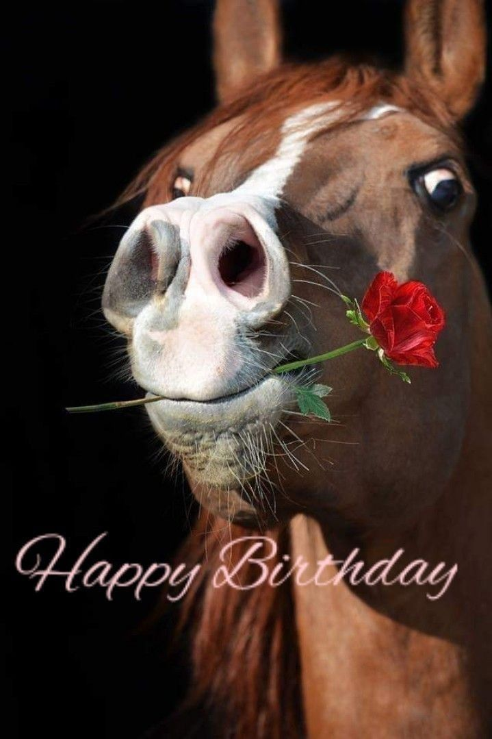 Фото с лошадьми поздравление с днем рождения