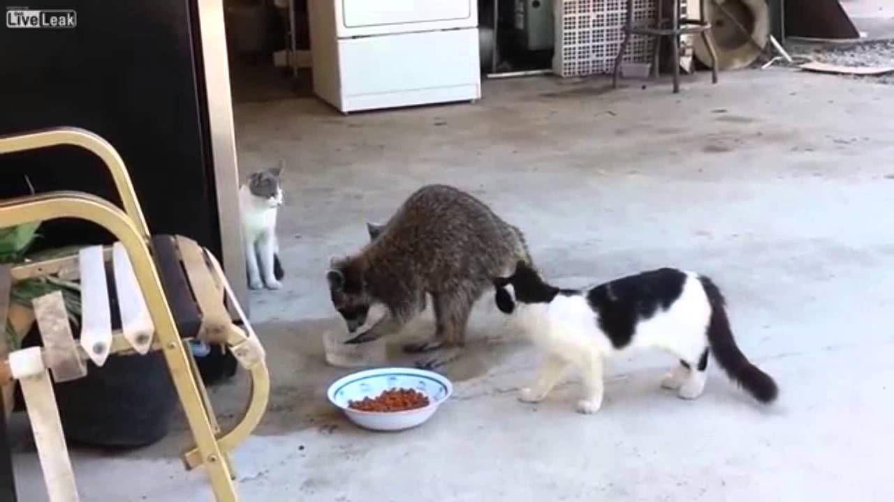 Cat gore liveleak
