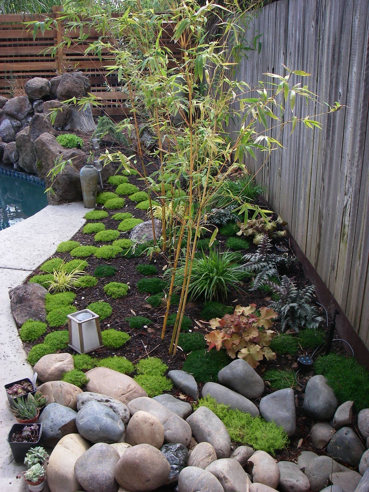 Superbe John And Fred, Owners Of A Home In The Foothill Farms Area Of Sacramento  Purchased Some Bambusa Multiplex U0027Alphonse Karru0027 Bamboo Plants From.