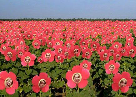 """Flower Hobi """"In bloom"""""""