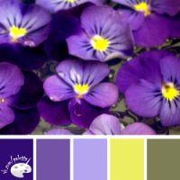 Gallery.ru / Фото #125 - сочетание цвета оттенки сирени и ...