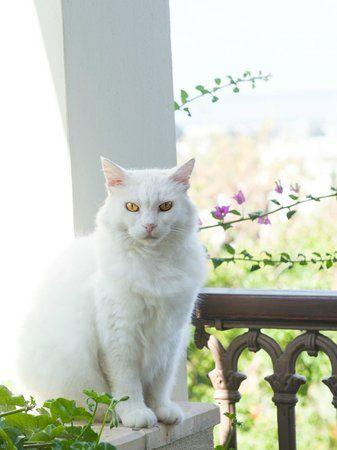 TripAdvisor balcony cat | Garden view - Picture of Sandima 37 Hotel Bodrum, Yalikavak ...