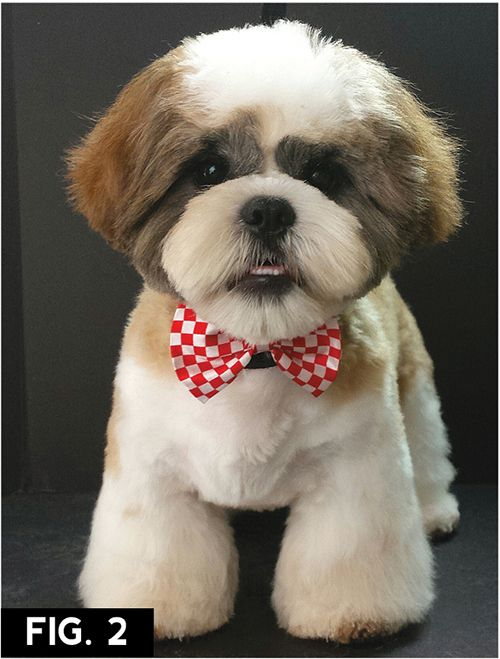 Asian Freestyle Groomer To Groomer Pet Grooming News Stories And Videos Dog Grooming Styles Shih Tzu Grooming Shih Tzu Haircuts Teddy Bears