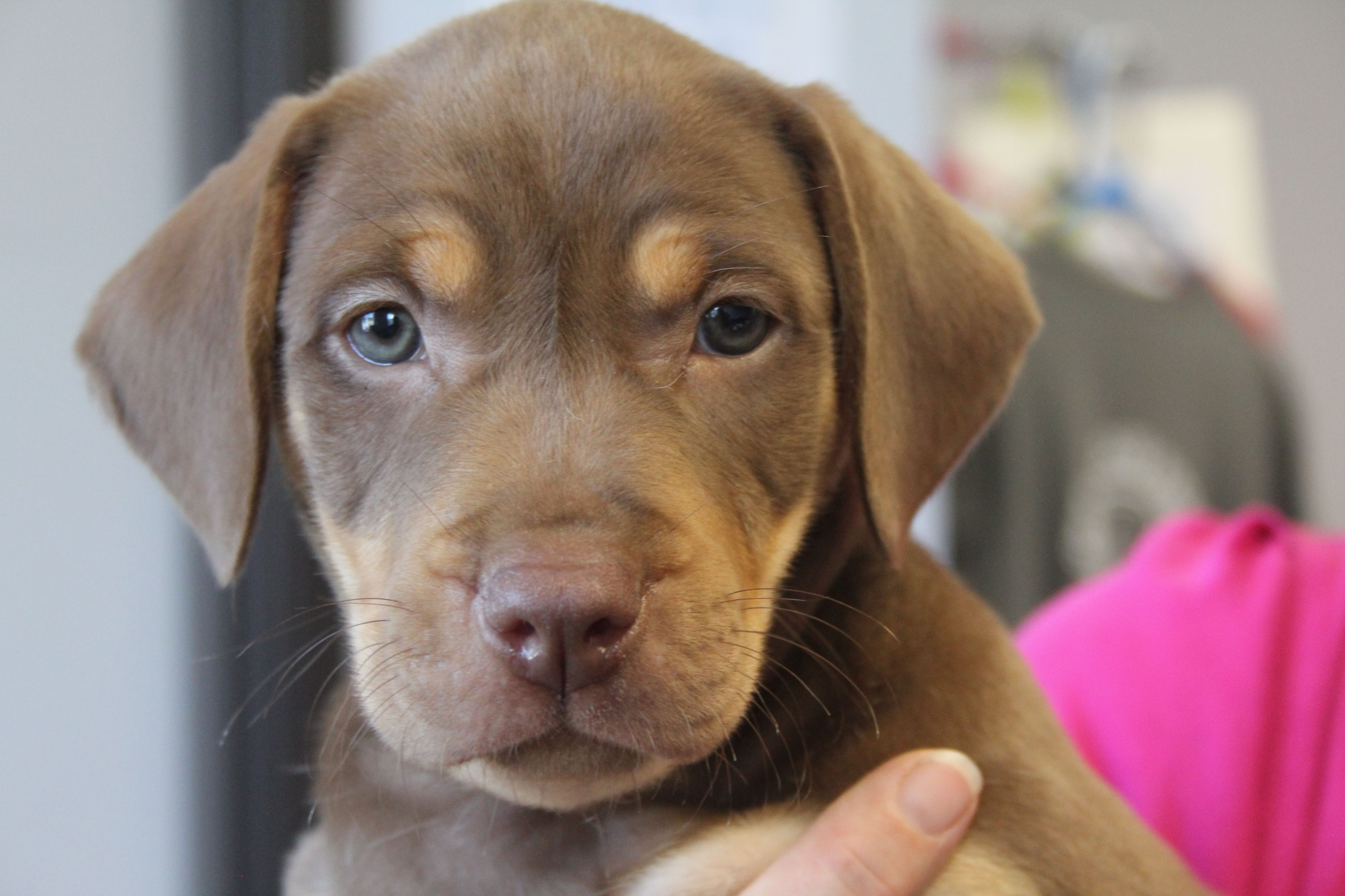 Adopt Carmel Local Pup On Rescue Dogs Pup Dogs