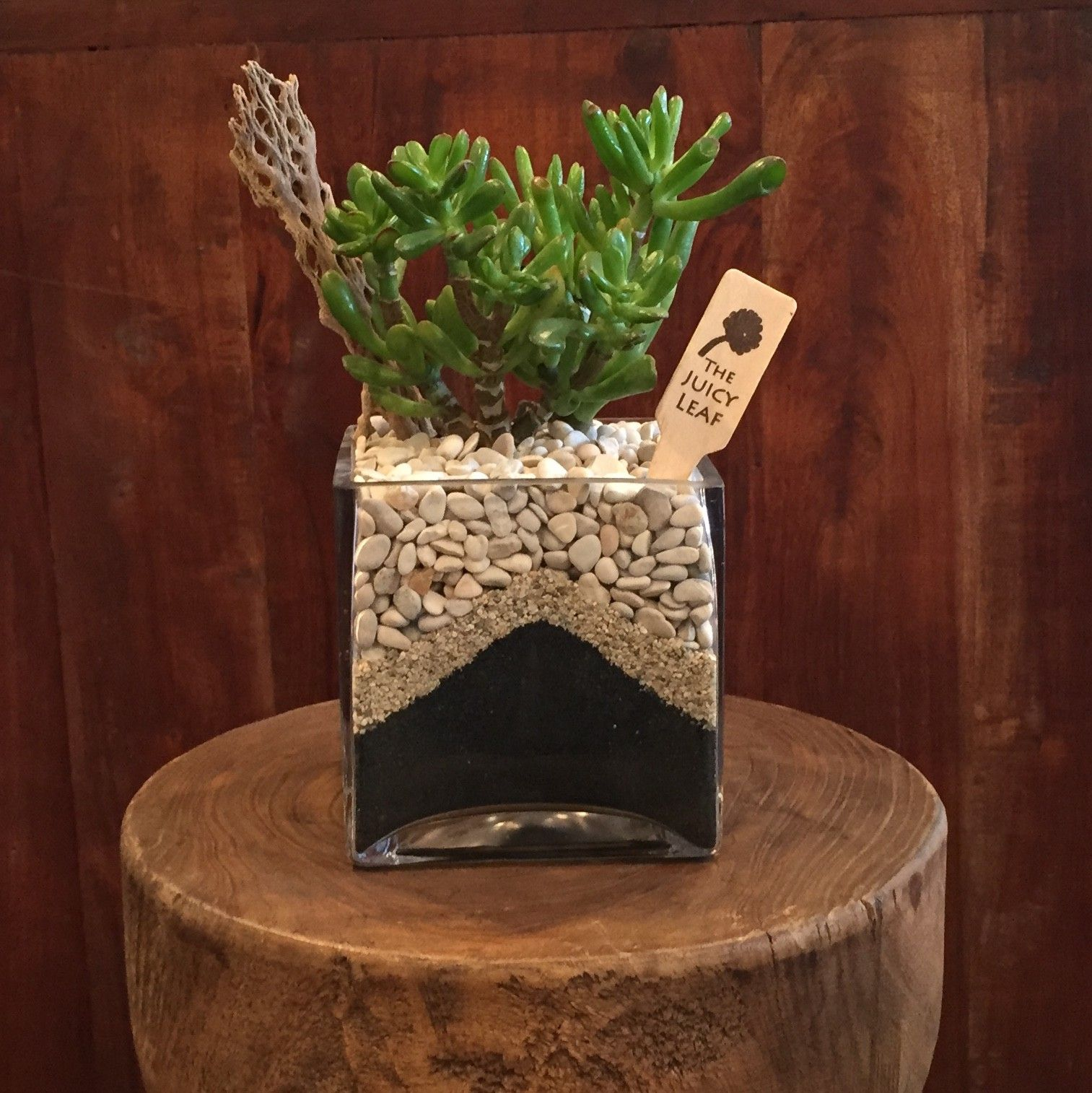 Succulent in a Square Vase with Black Sand & White Rock in
