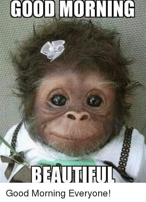 80 Good Morning Memes To Kickstart Your Day | Sayi