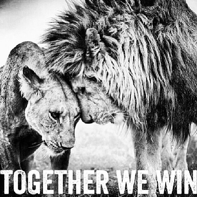 Power Couple Quotes Together We Win Love Quotes Couple Relationship Lion  My Love My