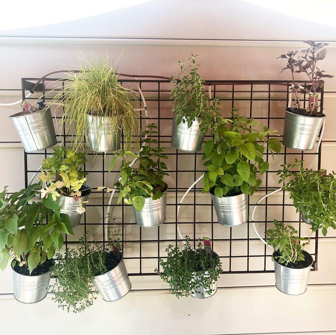 Here S A Quick Vertical Herb Garden Idea Trellis From