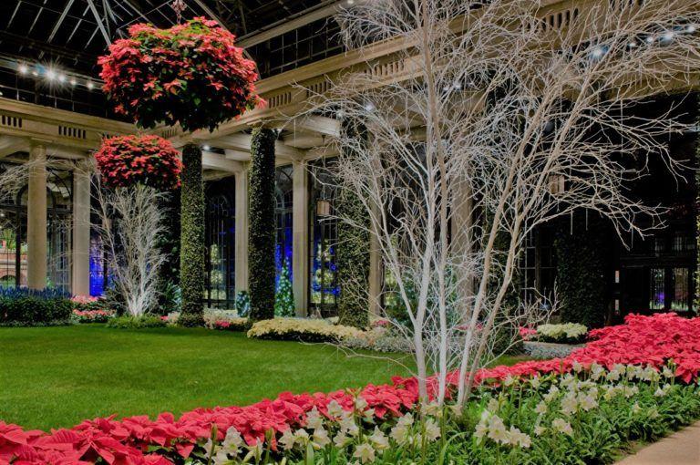 Gardens Flowrs Amaryllis Longwood Gardens Lawn HD Free Wallpaper
