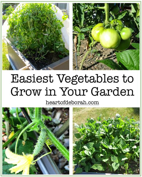 Superieur 5 Easiest Vegetables To Grow In Your Beginner Garden. Heart Of Deborah
