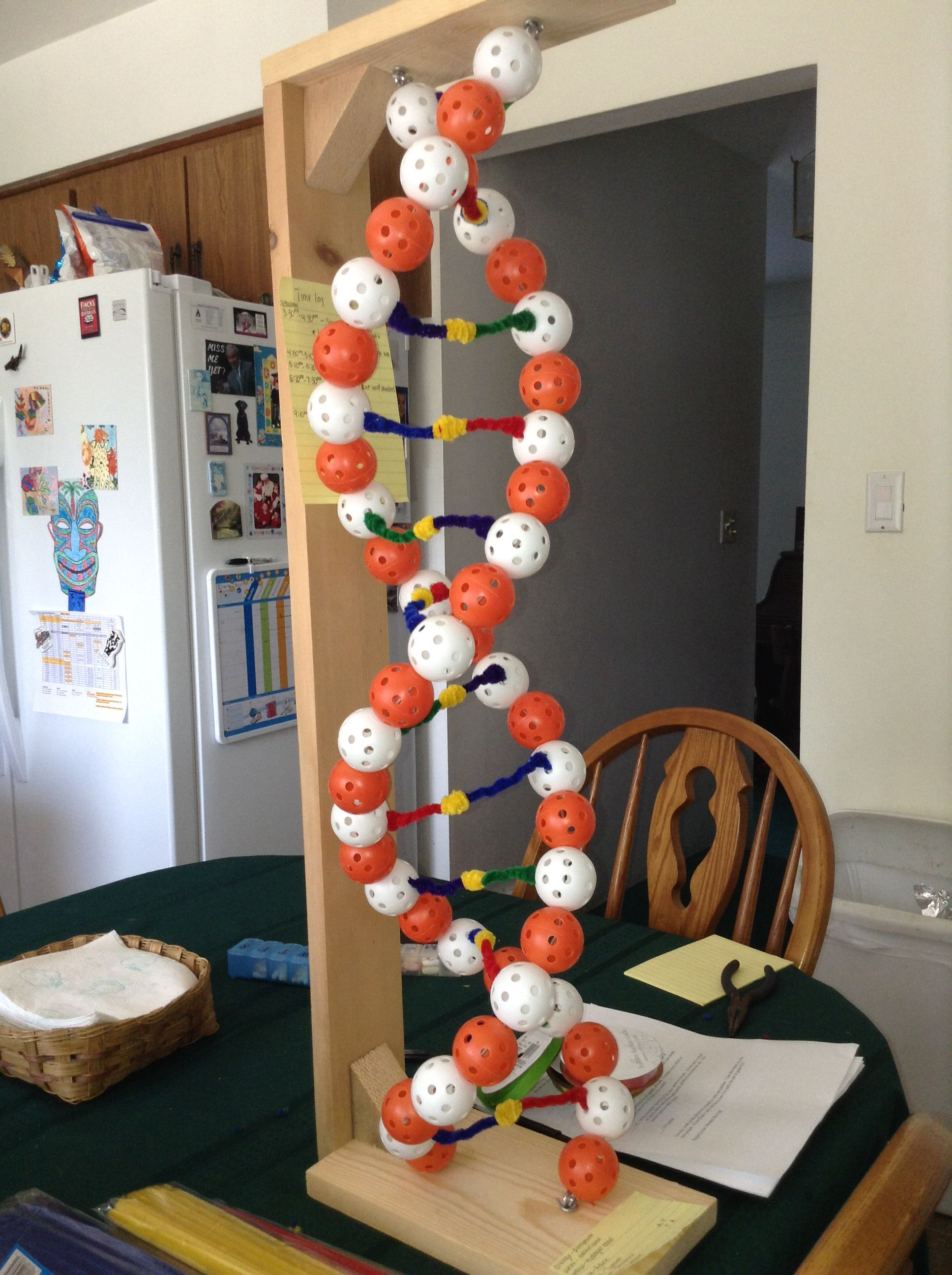 1000+ Ideas About Dna Model On Pinterest