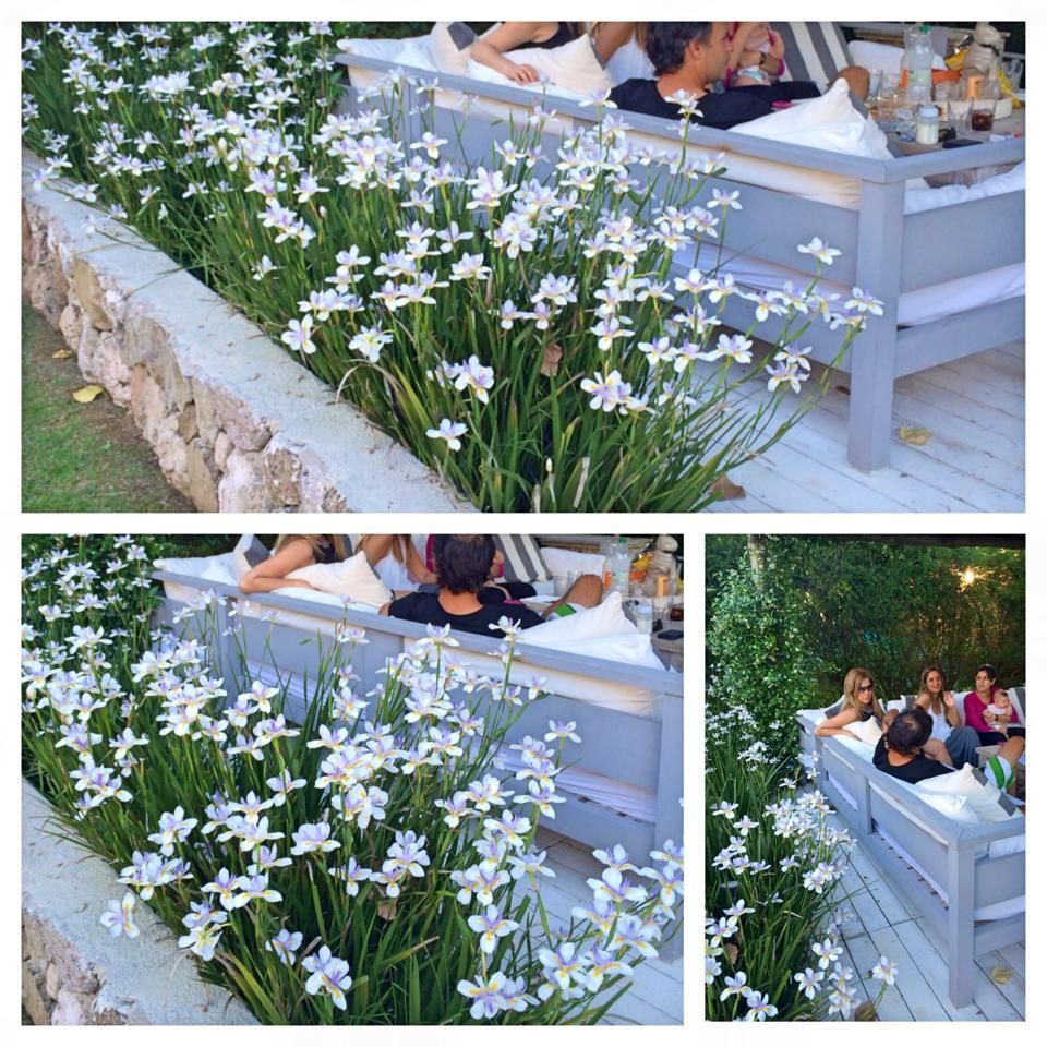 Flores dietes en cantero de piedra paisajista vanina for Escaleras para caminar fuera del jardin