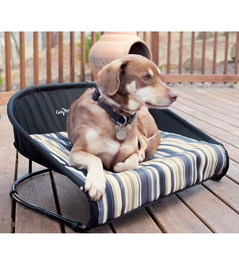 Dog Beds For Small Dogs, Raised