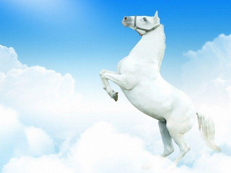 Les fonds d'écran - Un cheval blanc qui se cabre devant des nuages