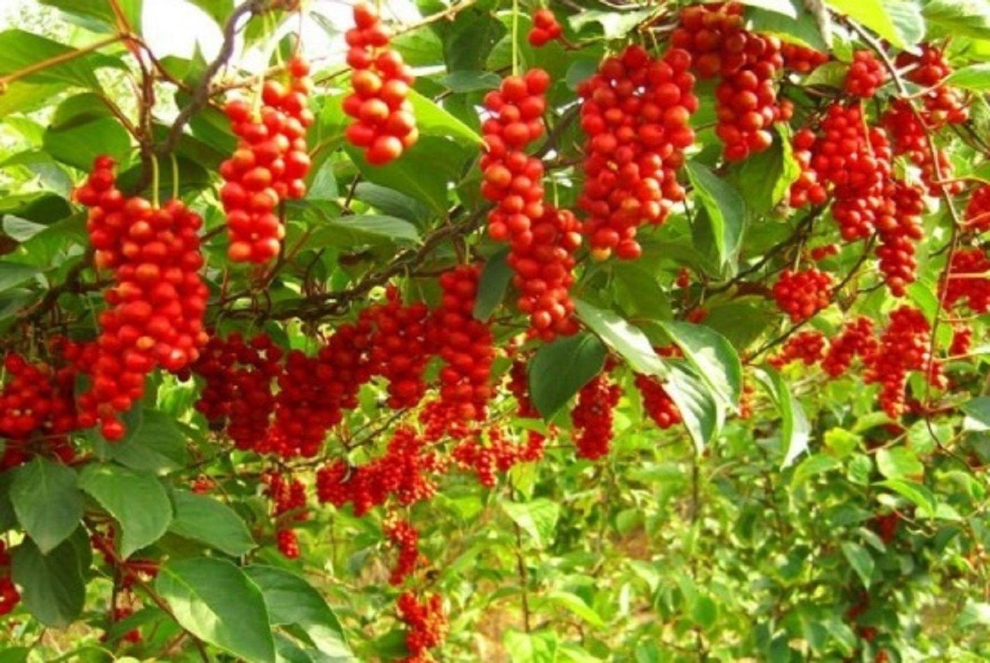 Jobelyn Natural Remedy For Cancer http://afritradomedic.blogspot.com/2016/07/jobelyn-natural-remedy-for-cancer.html