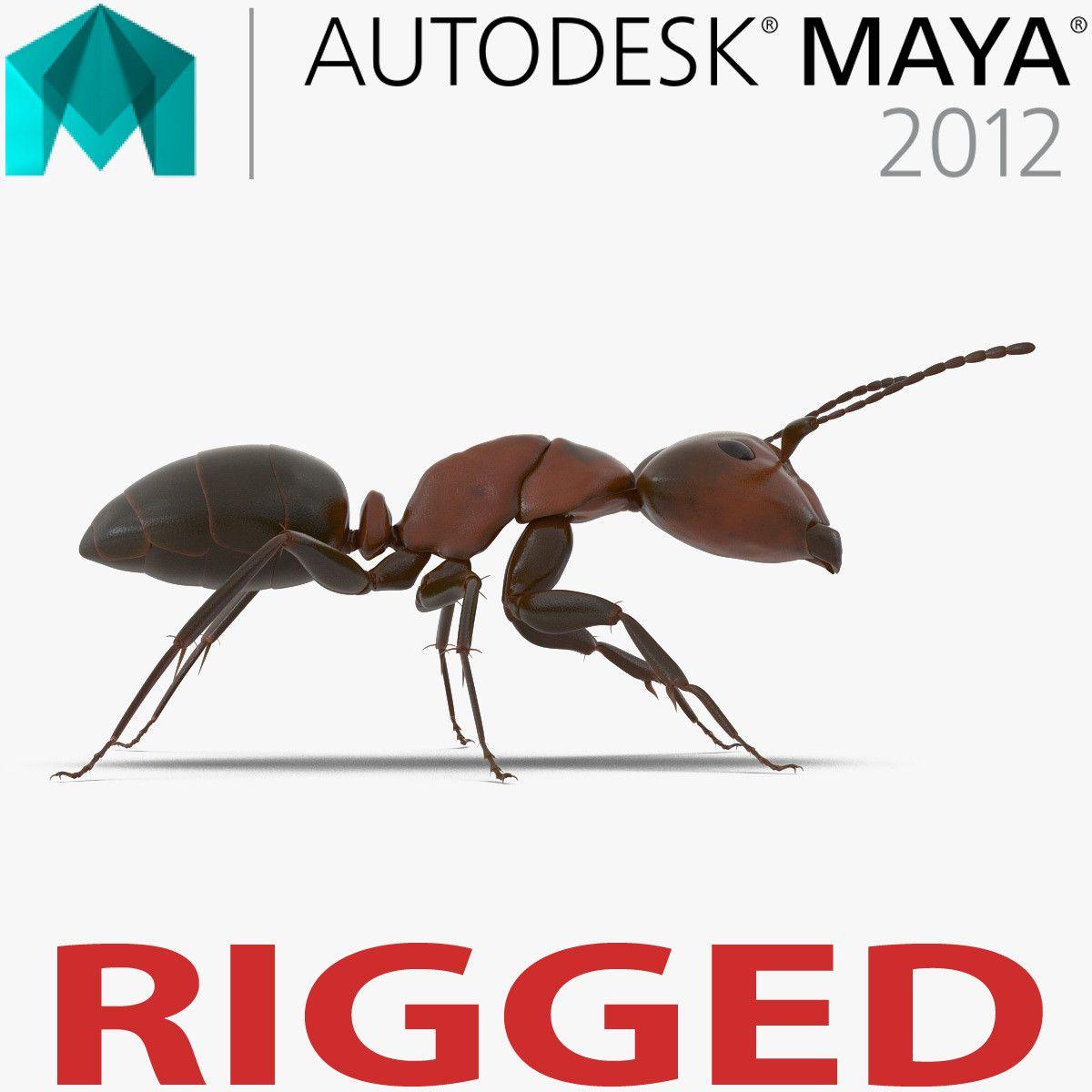 red ant 3d model rigged for maya animal 3d models pinterest