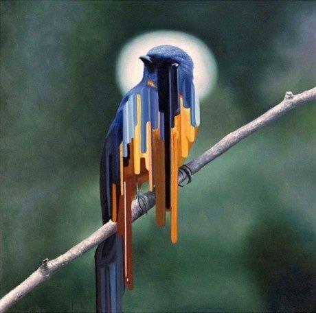 Dripping Bird