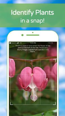PlantSnap Plant Identification on the App Store (With
