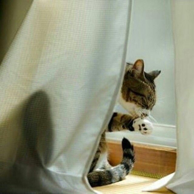Se gli umani sono fuori io li aspetto sveglia .... per la pappa notturna ovvio ;-)  #BuonWeekend a Tutti !   Dolci Sogni #a-mici !  #Buonanotte !   #Goodnight #Sleeptime #sleep #catsofinstagram #cats #instacat #cutecats #sweetcats #weekend #happyweekend #lovecat #cats #pets #animals #photooftheday  #ilovemycat #nature #catoftheday #lovecats   #catsmylove #Repost #gatti #dolcigatti #dolcicuccioli #ioamoglianimali #MIAO :-)