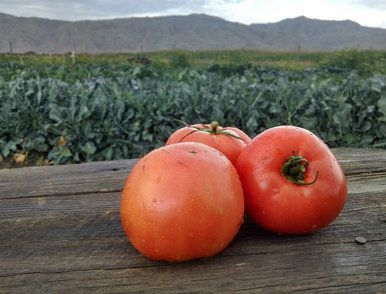 Tomatoes: Beefsteak (/lb)