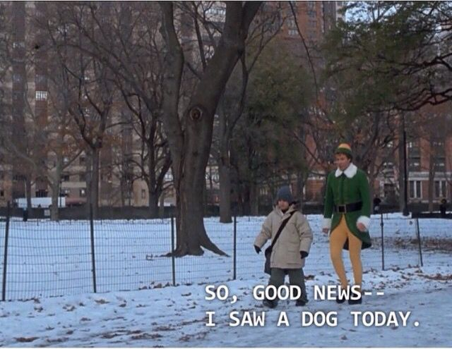 Me every time I see a dog in London.