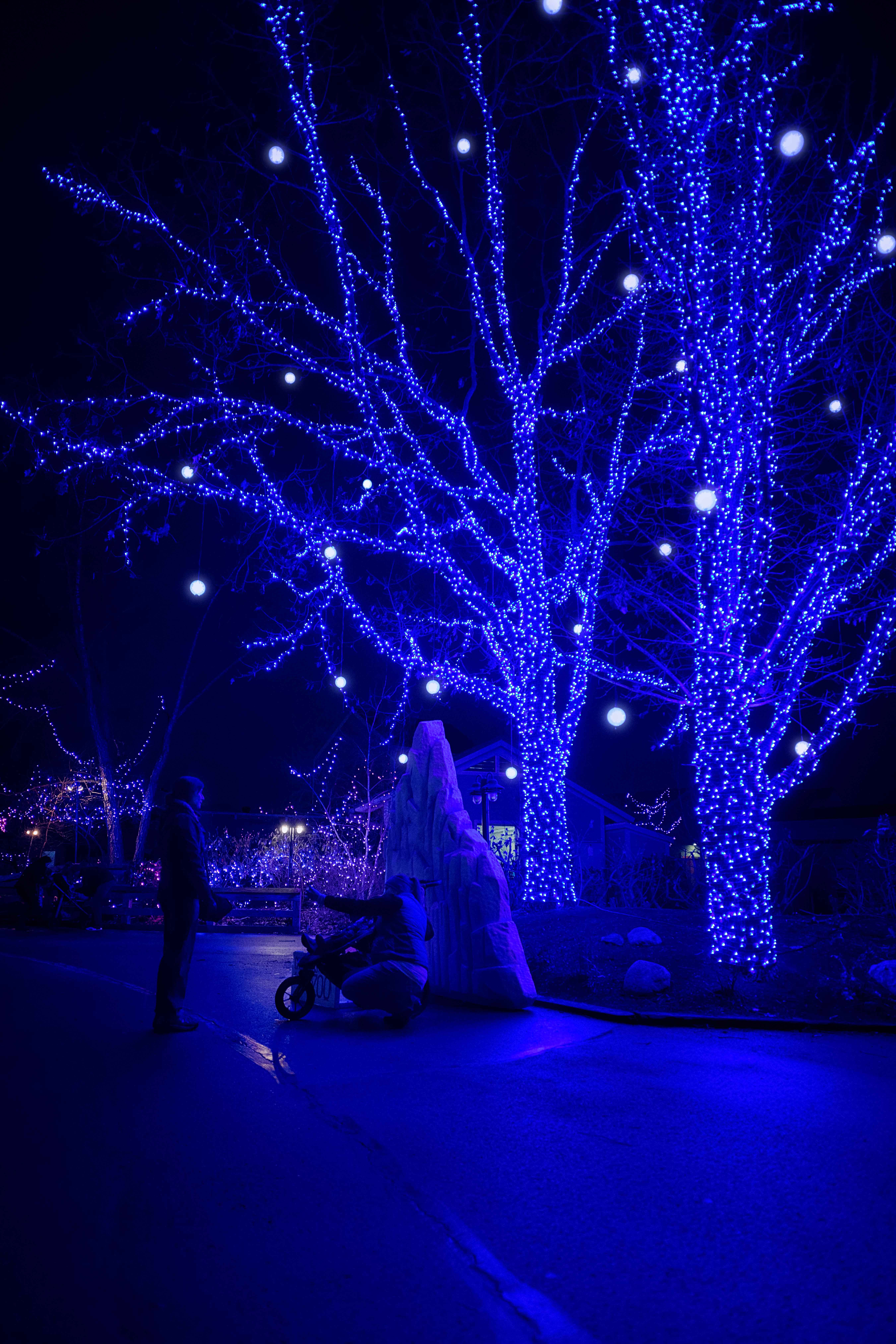 Beautiful Blues At The Indianapolis Zoo Christmas Festivities Indianapolis Indy Christmaslights Commercial Photography Photography Inspiration Photography