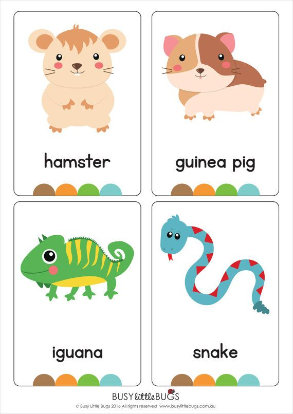 My Pets Flash Cards AUTOMATIC DOWNLOAD by BusyLittleBugsShop   tranh ...
