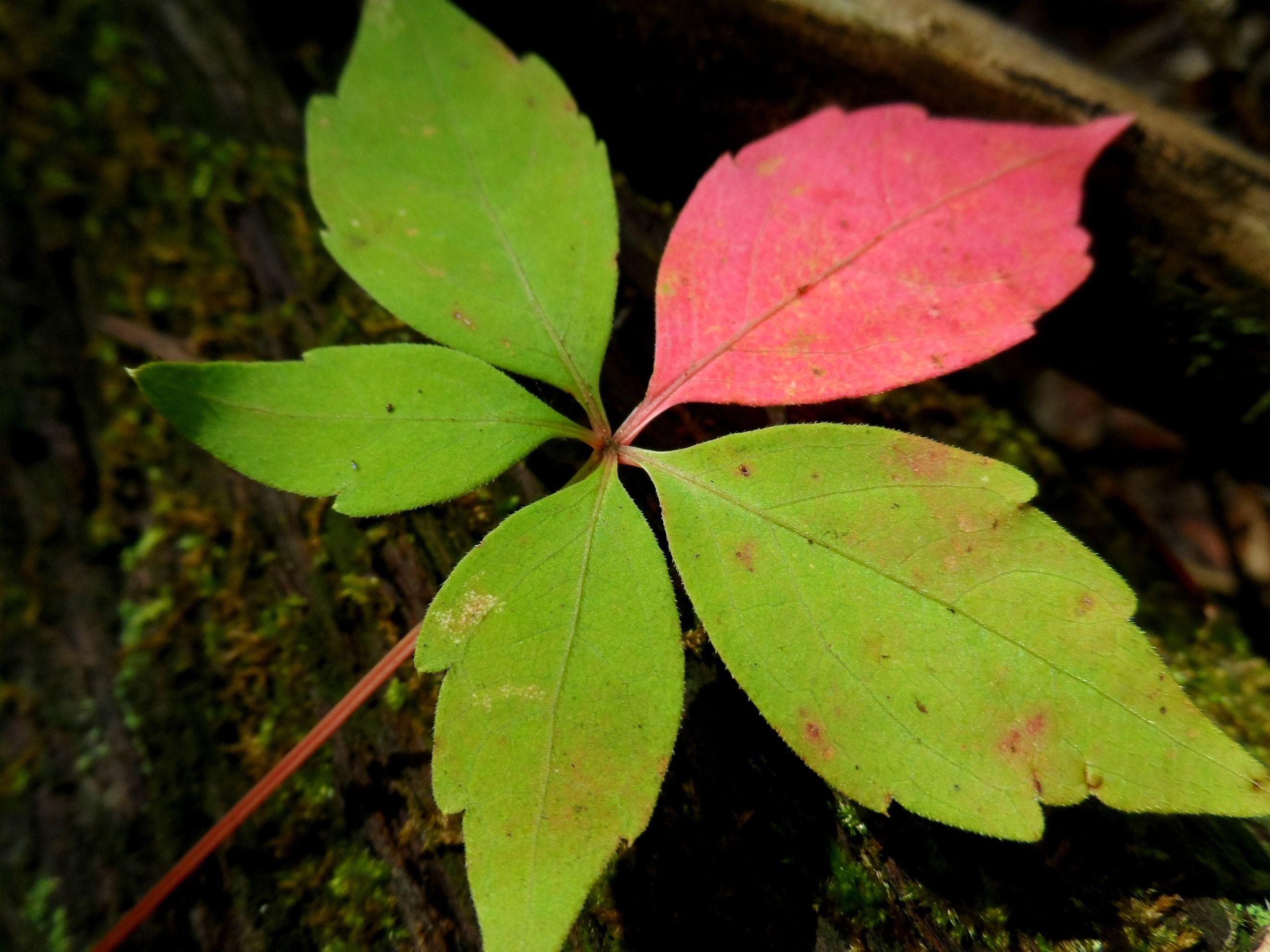 One pink leaf.