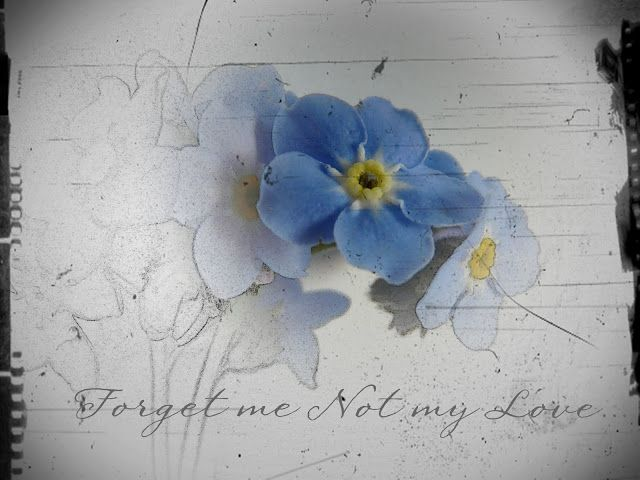 forget me not flower drawings - Google Search this would ...