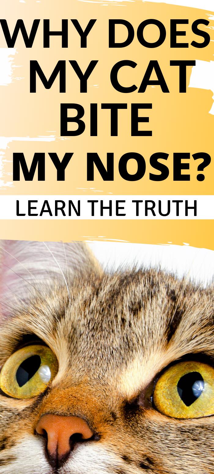 Pin on Cat Behaviors Explained