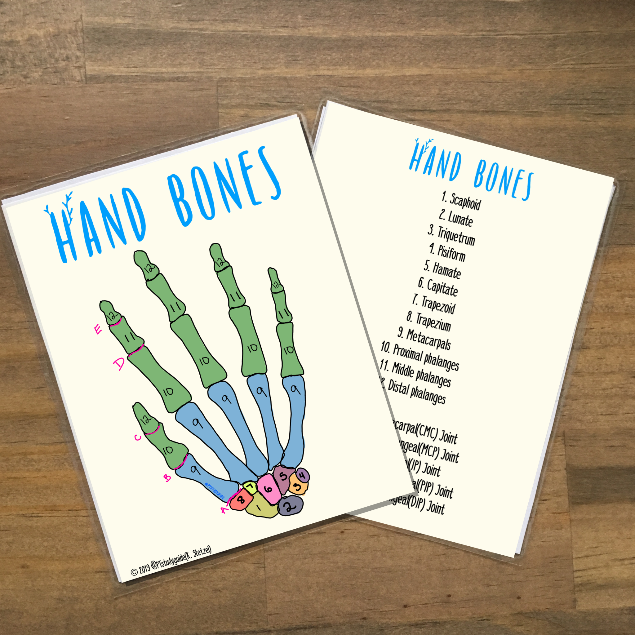 Handmade Anatomy Flashcards Versions Available For