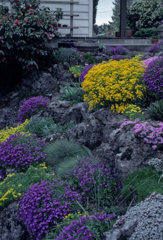 trockenmauer bepflanzen steingarten blaukissen garten pinterest garten steingarten und. Black Bedroom Furniture Sets. Home Design Ideas