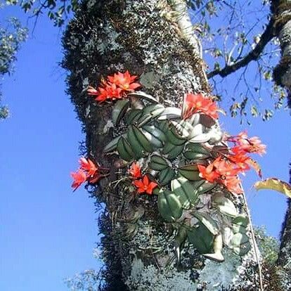 #RevistaLaClotilde #CultivodelAgro #Agronegocios #Orquideas #Misiones  info www.laclotilde.com Facebook