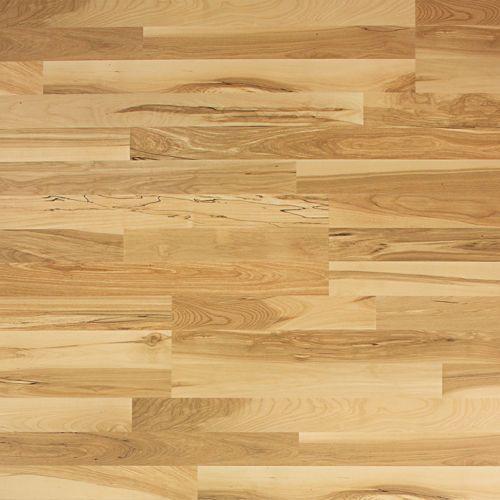 Harmonics Honey Maple Flooring 22 09 Sq