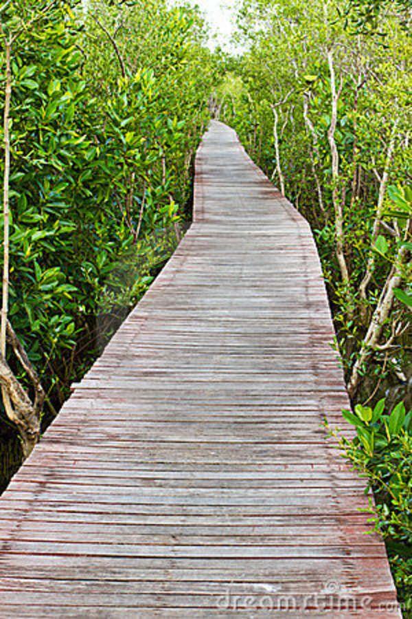 Wooden Path Through Mangrove Trees? Design Ideas