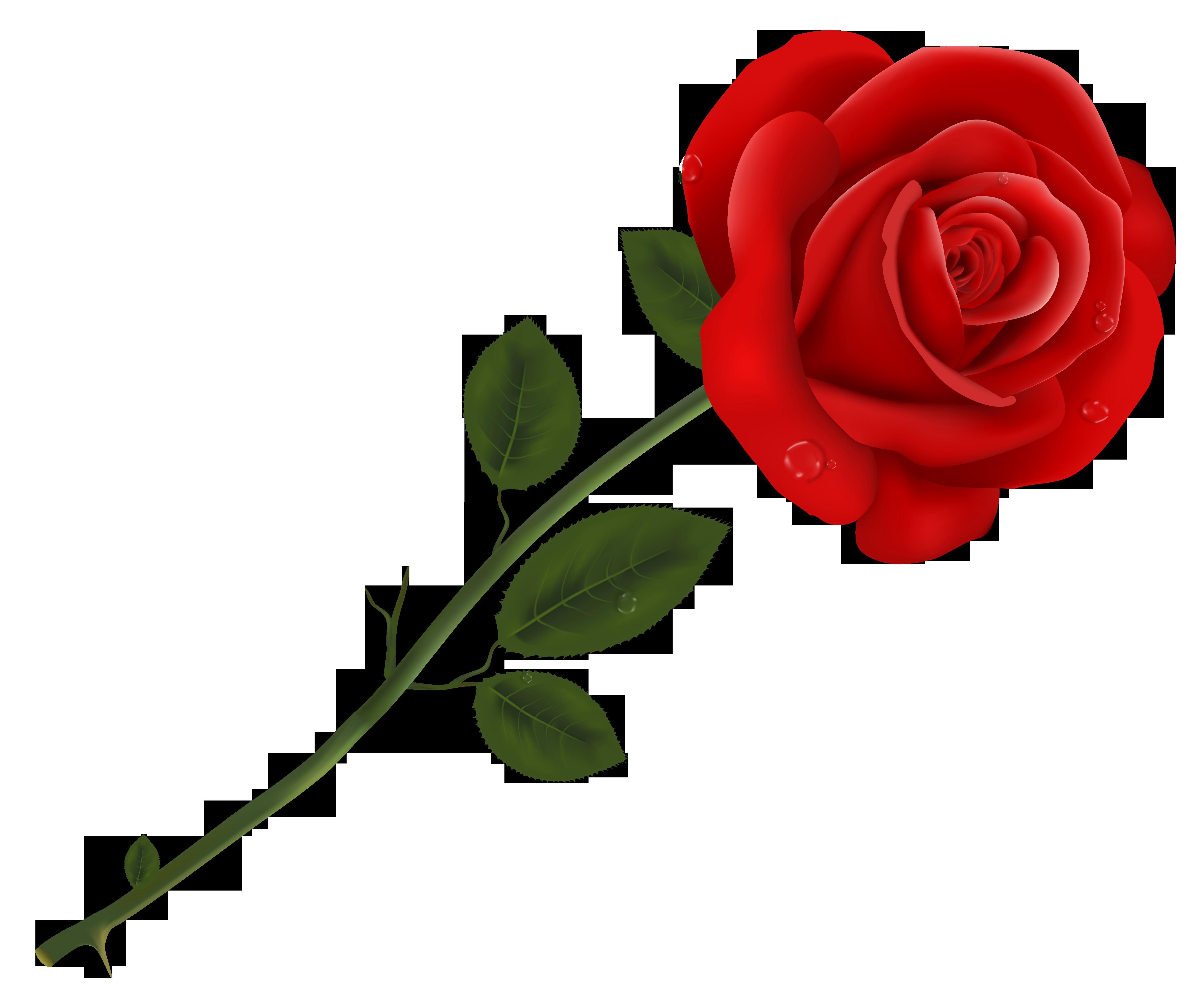 rose015.jpg 5,270×4,411 pixels Red rose flower