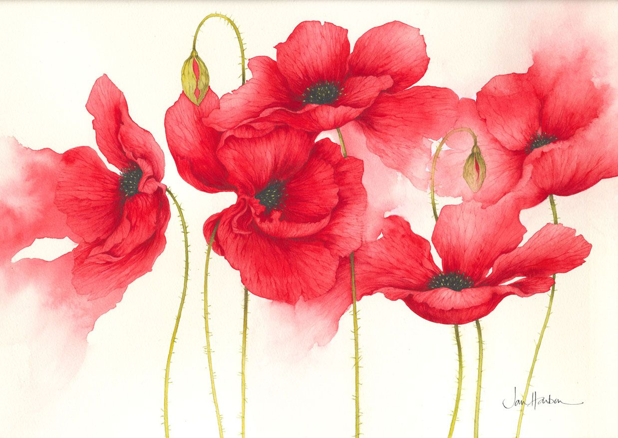 watercolor poppies red learning how to paint watercolor poppies