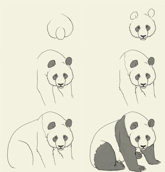 How To Draw A Panda Drawing Tutorials Videos Pinterest