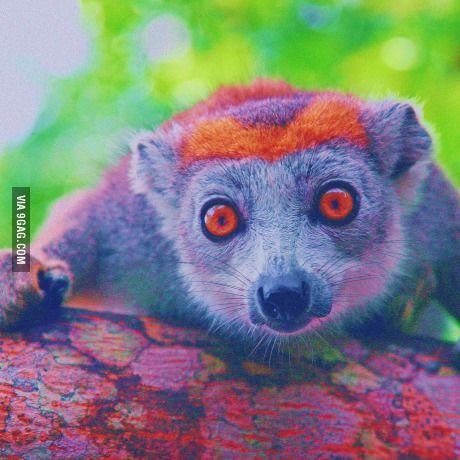 This Picture Contains Every Color In The 24 Bit Rgb Colorspace Exactly Once Animals Beautiful Cute Animals Lemur