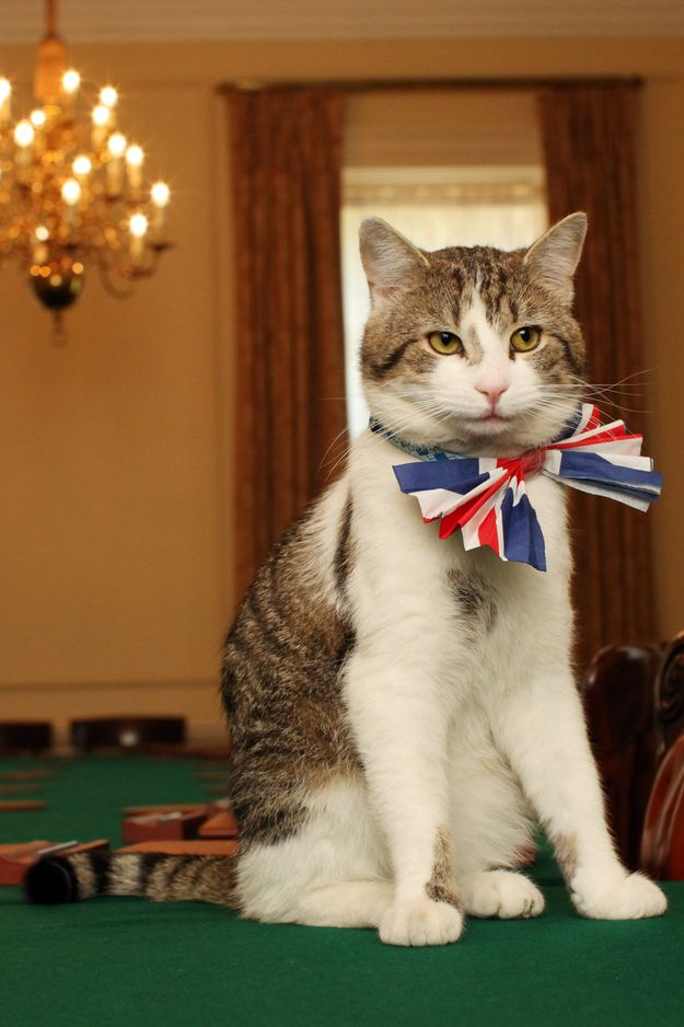 The Official MouseCatching Cat Of Britain Just Got Fired