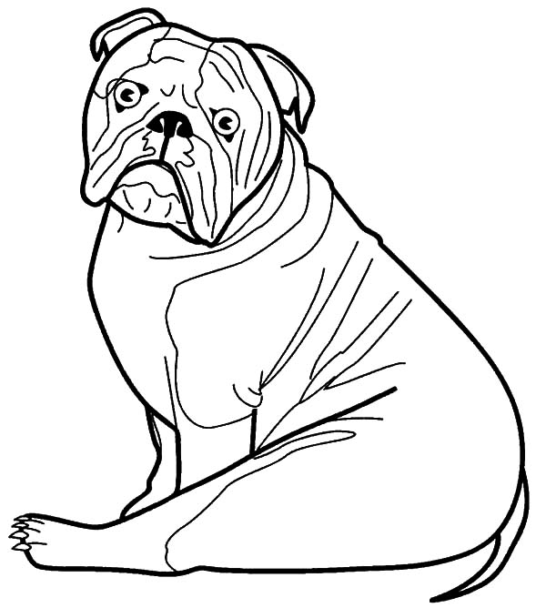 Bulldog Is Surprised Coloring Pages Best Place to Color