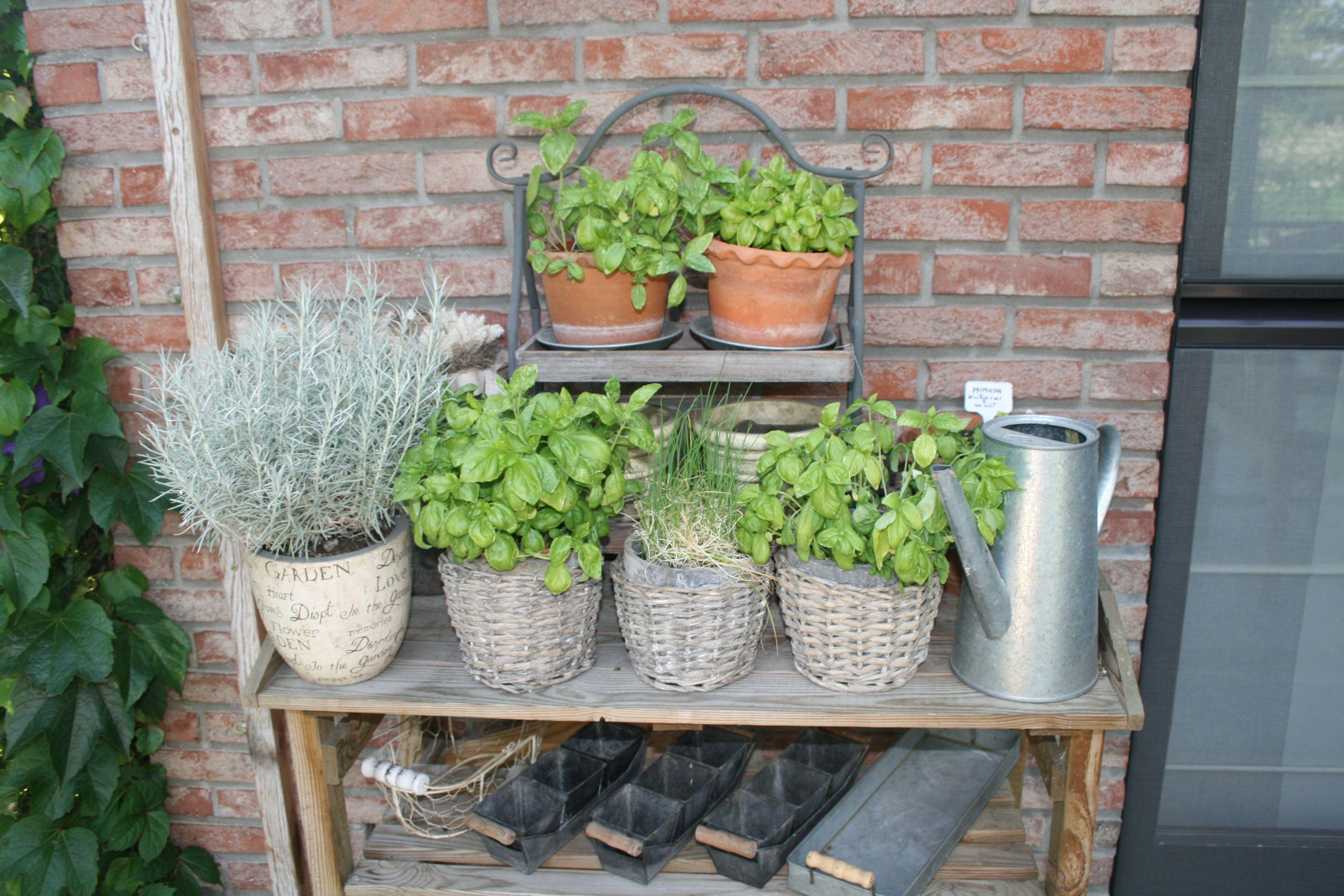 Garten Janssen kräuter diepenbeek garten janssen garten